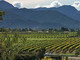 Vinyards fill the broad Wairau Valley; Nelson is beyond the rugged Richmond Range.