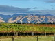 Vineyards backed by dry hills and mountains, the classic Marlborough view.